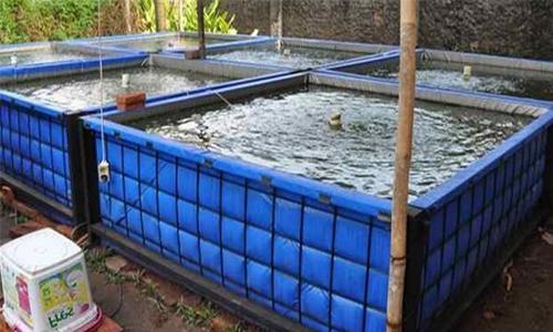 cara budidaya ikan nila di kolam