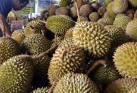 wisata durian lampung