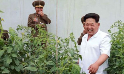 Korea Utara Jadikan Mayat Sebagai Pupuk